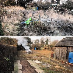 """Before and after of an allotment clearance today. Everything cut down including 4 conifers, boundary hedges boxed back in. Next phase will be to go in with a digger and scrape the top off, followed by a going over with the rotovator. It will be back growi <a style=""""margin-left:10px; font-size:0.8em;"""" href=""""http://www.flickr.com/photos/137723818@N08/31436778535/"""" target=""""_blank"""">@flickr</a>"""