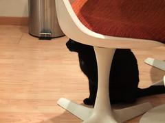 Ikkje heilt skjult (konstruksjon) Tags: katt cat chat gatto katze mishi kedi neko gato chatnoir blackcat