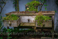August 16, 2015 - 6 - ancient, Antique, background, board, dark, desk, Growing, material, Moss, Old, Plants, retro, rough, Rusty, Structure, Table, texture, textured, vintage, wall, Wood, wooden (elliotbalynn) Tags: wood old england plants texture wall vintage dark table wooden moss ancient desk unitedkingdom antique background board rusty structure retro gb material growing rough stalbans textured
