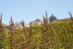 Alps 1 (Felix Meyer Photo) Tags: flowers blue summer sky mountain france mountains alps landscape felix himmel blumen berge alpen landschaft meyer blauer vanoise