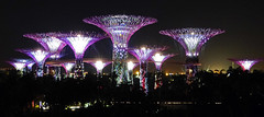 Gardens by the Bay 02 (brentflynn76) Tags: city trees light urban tree gardens skyline architecture night garden lights bay singapore cityscape super