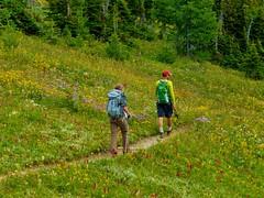 7-087 (Gnarlene) Tags: flower hiking banff healypass monarchramparts