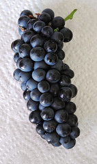 Perfect Petite Sirah 2015 (Judy's Notebook) Tags: harvest grapes 2015 winegrapes petitesirah pasorobleswine durif foodiejudybloggercom