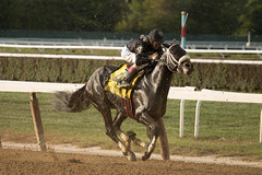 Full Gallop (Kurt582) Tags: autumn horses horse fall sports canon track belmont racing telephoto horseracing nyra 70d brothersofthetime