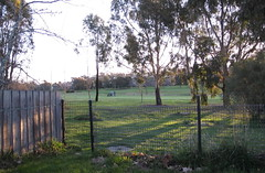 A nearby walk through a gate to the golf links completes a short walk (spelio) Tags: street creek fence landscape evening gate walk australia suburbs canberra sep act 2015