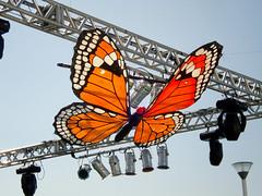 Butterfly (Gijlmar) Tags: brazil southamerica brasil ship brasilien brasile brsil brazilia amricadosul brazili amriquedusud zuidamerika amricadelsur sdamerika sydamerika brazylia  brazlie brazlia amerykapoudniowa americameridionale amricadelsud jinamerika dlamerika gneyamerika