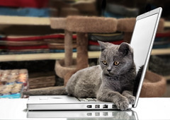 a kitten and a laptop (CoriJae) Tags: portrait pet white playing reflection cute animal closeup cat computer paw furry kitten funny technology looking background laptop tabby gray young kitty ukraine catfood domestic cuddly isolated catbed scratchingpost