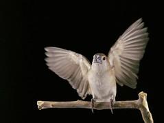 (mohd alsulaiti) Tags: bird birds fly flying photo google photos filckr follow follows 2015