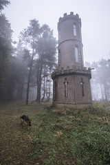 Dexter @ Kirkton Hill Tower 1 (Glesgaloon) Tags: history abandoned scotland ruins historical germanshepherd folly alsation laurencekirk historicbuildings scottishcastles glenesk scottishcastle scottishruins myrekirk kirktonhilltower