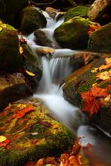 Gap Creek (MarcusDC) Tags: autumn water leaves creek cumberlandgapnhp