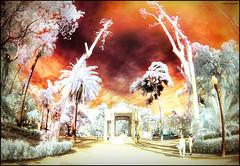 (2189) Parc Ribalta (IR & Fisheye world) (QuimG) Tags: ir golden olympus fisheye infrared retouch retoque pasvalenci retoc specialtouch castelldelaplana fotografainfrarroja quimg parcribalta quimgranell joaquimgranell afcastell obresdart
