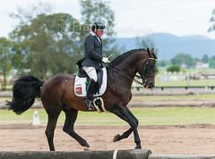 151204_Clarendon_5.2_2667.jpg (FranzVenhaus) Tags: horses sydney australia riding newsouthwales athletes aus equestrian supporters riders officials dressage spectatorsvolunteers