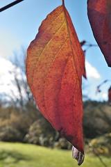 Hanging On (Mr.LeeCP) Tags: fall leaves