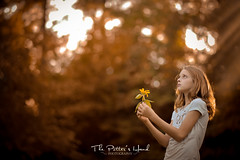 Autumn Welcome (The Potter's Hand Photo) Tags: autumn fall nikon lensbaby nikon105f2lens 105f2lens sunlight rays sunflare child girl brunette browneyes sunflower brown gold yellow golden orange harvest light forest trees nikond700