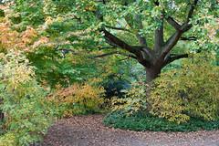 Peckham Rye - Autumn 2016 (Lady Haddon) Tags: peckhamryepark peckham se15 southwark autumn2016 autumn park explore