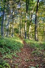 Weg / Wald (shortscale) Tags: wald weg pfad