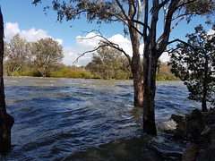Main channel of the Murray River, just downstream of the Weir 20161003_111200 (heritagefutures) Tags: twelve gates hume dam southern albury flooding