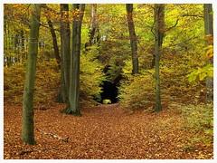 tunnel/autumn (czorneboh) Tags: hohburg hohe burg tunnel moritzburg dresden sachsen saxony deutschland germany