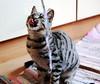 GATTO 02 (cariatide44) Tags: felini domestici gatto