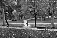 image (Luis Iturmendi) Tags: rboles trees blancoynegro monocromo monochrome blackandwhite bw park parque ways caminos airelibre otoo autumn