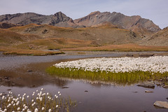Flock of Flocks (Laurent Moose) Tags: valsavarenche valledaosta italien allfreepictures bestof2016