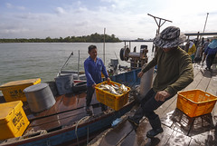 Fisherman unloading their catch at Sg. Udang fish center. (<Pirate>) Tags: sungai udang nibong tebal fishing point fish traders fresh october 23rd 1018 is stm ray masters gnd 9soft penang malaysia