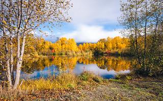 An Autumn Moment