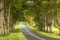 (Joaquim Pinho Photography) Tags: dorset uk england south europe outdoor trees lane road joaquim pinho portugues paisagem photography benro