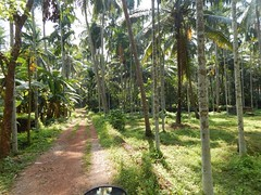 Villages Near Calicut Kerala Photography By CHINMAYA M (29)