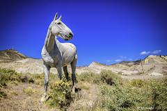 quien viene? (Mauro Esains) Tags: patagonia potros caballos campo tranquilidad flores pasto comiendo cerros alambrado tronco poste matas malaspina abrojos observando paisaje