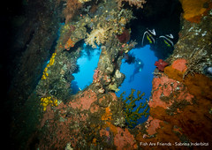 The Liberty (Sabrina.I) Tags: tulamben indonesien tauchen wreck wreckdiving corals liberty bali diving underwater sea ocean water
