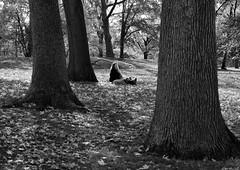 Peace in the Park _ bw (Joe Josephs: 2,861,655 views - thank you) Tags: autumn centralpark cityparks fall fallcolor fallfoliage joejosephsphotography nyc newyork newyorkcity travel travelphotography urbanparks landscape landscapephotography outdoorphotography parks blackandwhitephotography blackandwhite urbanlandscapes