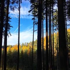 Unterwegs im Schneckengrüner Wald…   #Hiking #Outdoor #Garmin #Oregon750t #fēnix3 #BeatYesterday #running66