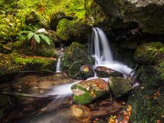 Otoo (bertigarcas) Tags: olympus omd em5 zuiko 918 paisaje landscape otoo autumn bosque wood creed river riachuelo rio infierno asturias espaa spain