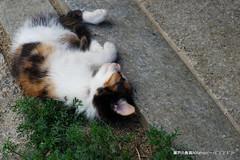 (GINPA ) Tags: cat sony ho