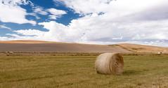 Hay bales on farmland (gourab66) Tags: travel rural washington nikon agriculture haybales palouse nikond810 palousescenicbyway nikon1635mmf4vr