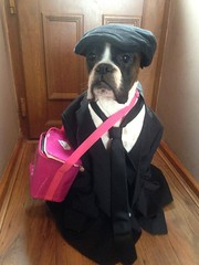 Stockwell the dog it's her first day at school today http://t.co/EpMm78uyP5