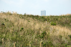 Peekaboo (Andy Marfia) Tags: park chicago grass hill f10 trumptower lakefront aoncenter northerlyisland 1250sec iso110 d7100 1685mm