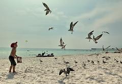 panama city beach florida (65mb) Tags: 65mb panamacitybeachflorida beaches floridabeaches floridavacation vacation visitflorida sunshinestate placestoseeinflorida vacationinflorida athousandviews 1000views viewedoverathousandtimes athousandormoreviews