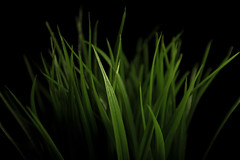 Dramatic Grass (twinsfan7777) Tags: lighting new plant black green ikea grass yard canon studio furniture earth decoration lawn dramatic plastic