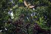 Released (M0nZDeRR) Tags: bird window nature bentivi