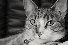 Picture of my cat takin with my fuji xt10, Just out the box brand new (ryanc19940) Tags: cats animals cat fuji xt10 fujixt10 fujifilmxt10