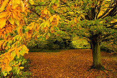 Autumn on Hampstead Heath (Joseph Whitworth Photography) Tags: autumn trees sky plants london leaves thames night river lights evening branches londoneye bigben heath hampstead