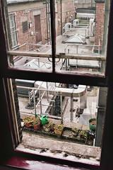 _London_ (Corentin Schieb) Tags: life street old city uk light wild plants green london film window analog 35mm photography escape view decay roadtrip analogue argentique kodakmoment corentin schieb keepexploring