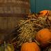 Tivoli gardens - Pumpkins - 2/3