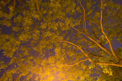 (Trees By Streetlight), Paris Bastille (flatworldsedge) Tags: longexposure trees light blur paris leaves night print streetlight glow streetlamp branches pollution swirl bastille furoshiki