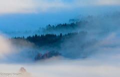 Morning mist (Ingar H) Tags: morning mist fog forest skog morgen dis tke