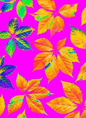 56948.07 Parthenocissus quinquefolia (horticultural art) Tags: leaves pattern psychedelic virginiacreeper parthenocissus parthenocissusquinquefolia horticulturalart