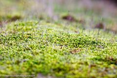Mousse dans la fort (edouardclaisse) Tags: forest hiver couleur fort 135mmf2l canon5ds