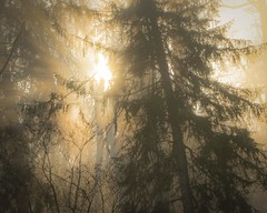 Burn (Thomas James Caldwell) Tags: morning trees light sun mist texture nature fog forest woods pennsylvania atmosphere pa